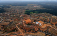 Question écrite :  Importation d'huile de palme à la raffinerie La Mède