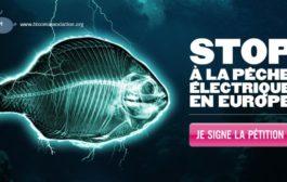 Question écrite :  pêche électrique