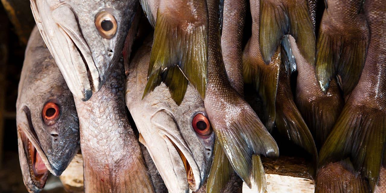 Pêche électrique : « Cette pratique fait honte à l'Europe et nous décrédibilise sur la scène internationale »