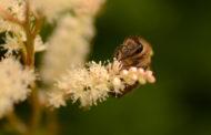 Question écrite : Évaluation des risques des pesticides