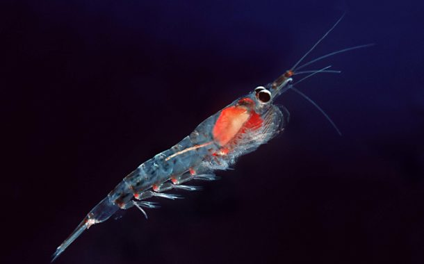 Question écrite : Pêche au krill en Antarctique