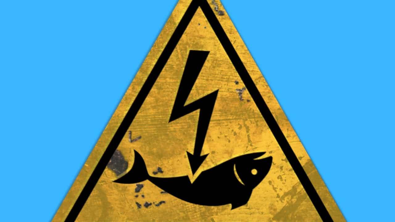 Pêche électrique : après la victoire de Younous Omarjee, les députés insoumis demandent l'interdiction immédiate en France