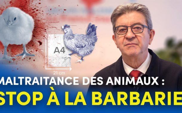 Maltraitance des animaux : stop à la barbarie