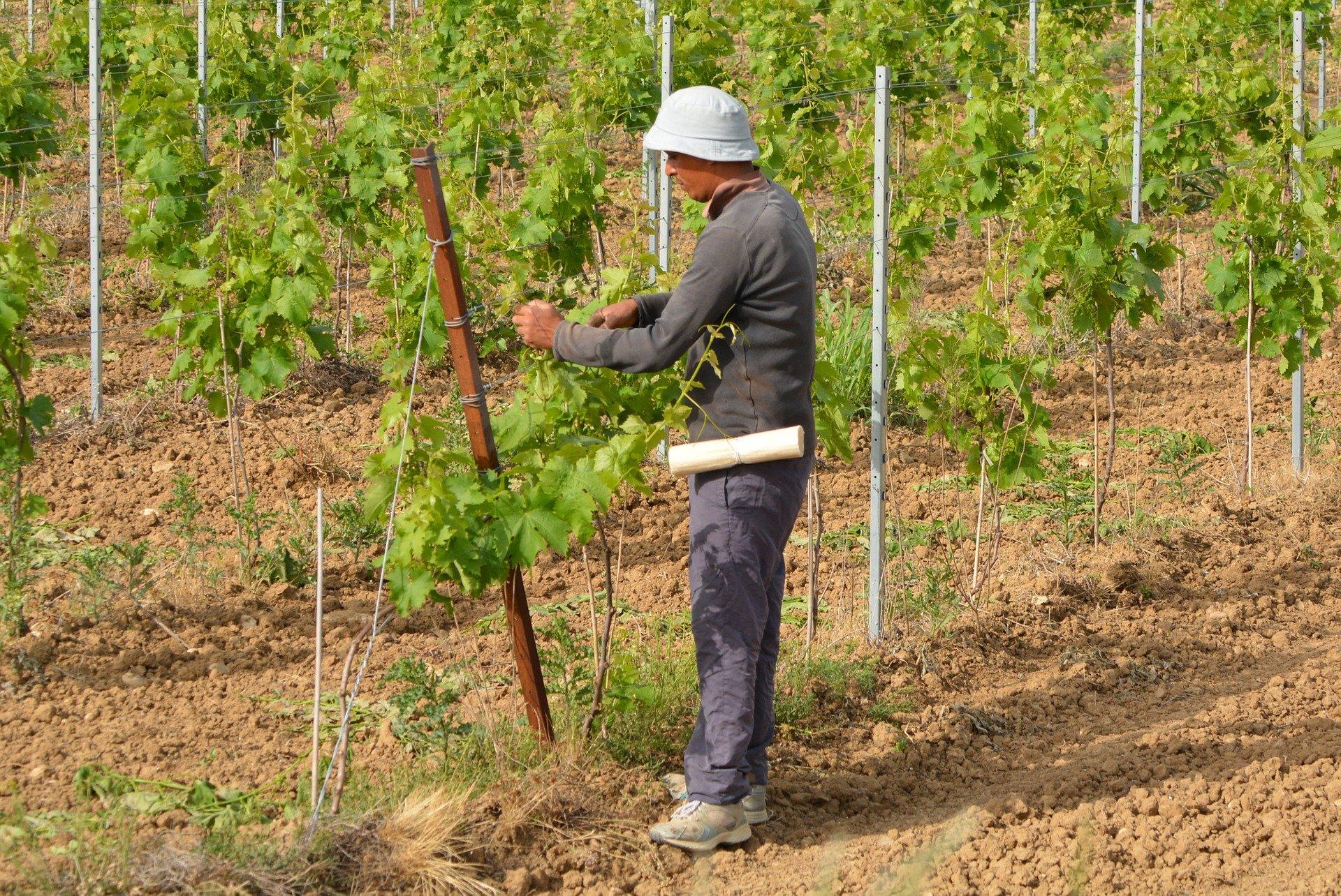 Question écrite : situation des travailleurs saisonniers