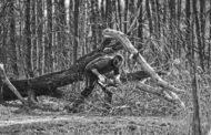 À quoi bon détruire la forêt et ses travailleurs pour planter ensuite des arbres ?